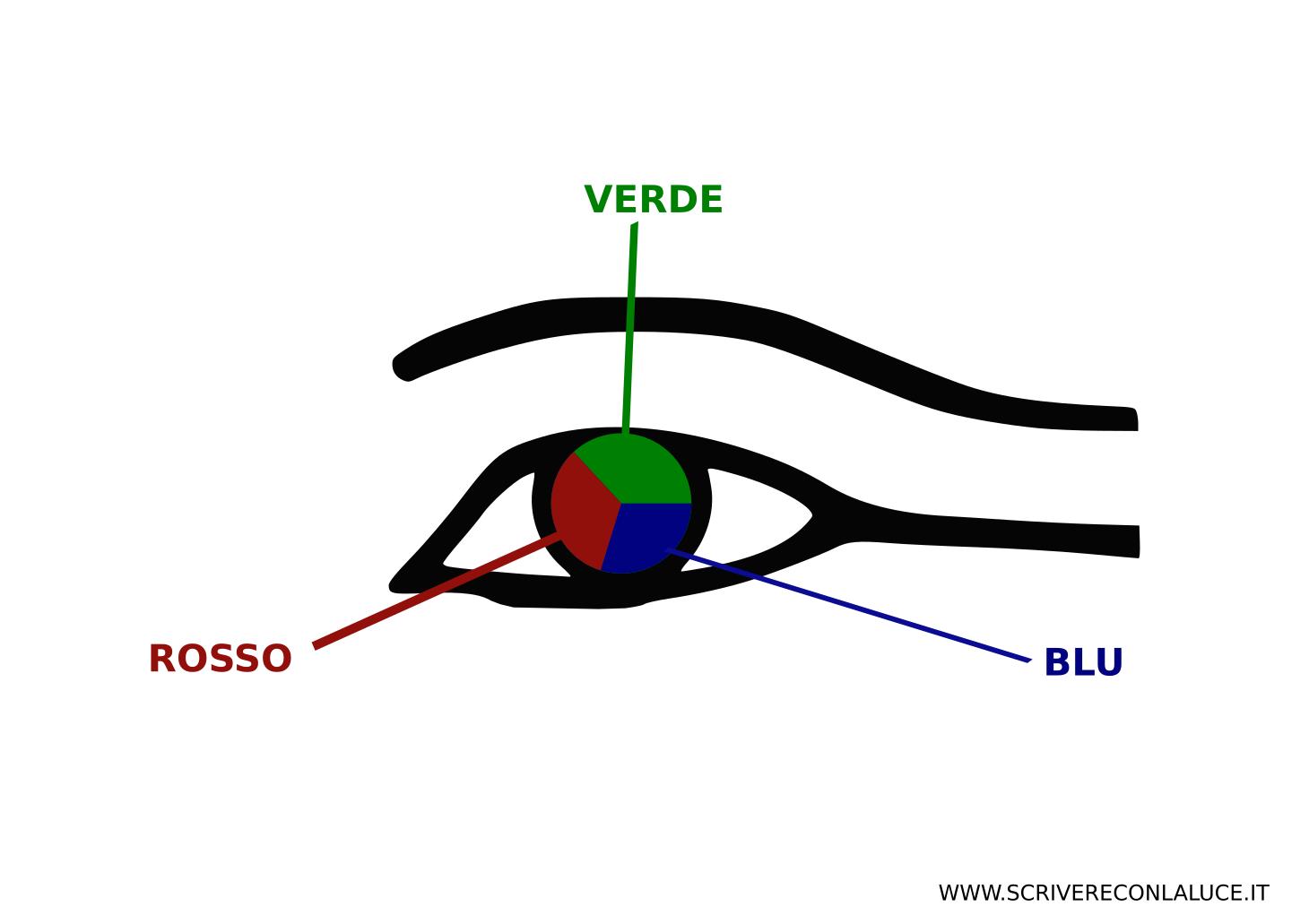 recettori dell'occhio